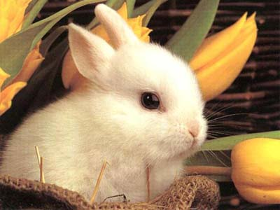 Cute Easter Bunny Rabbit